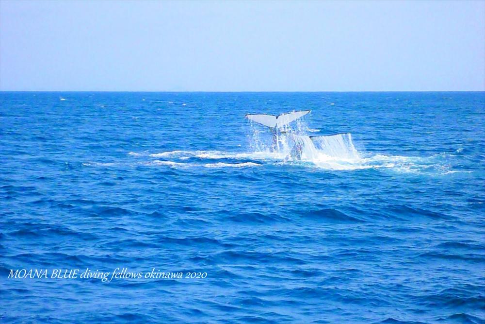 沖縄ホエールウォッチング