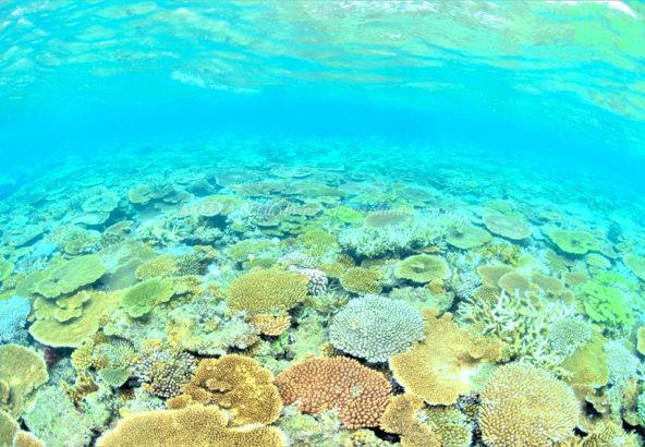 沖縄サンゴ礁