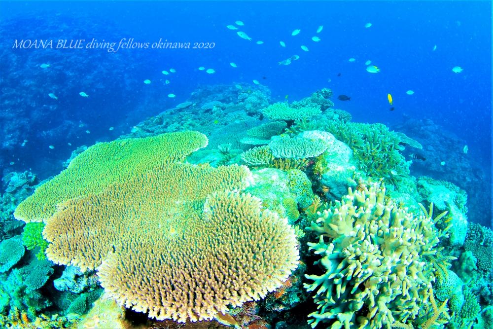 恩納村サンゴ水中写真