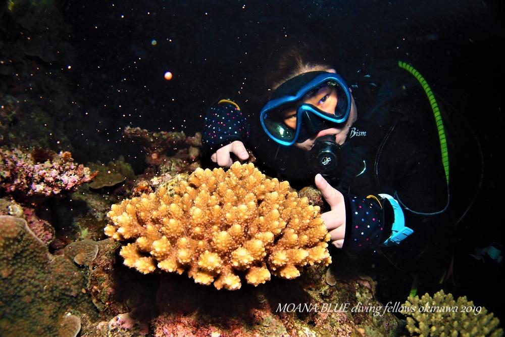 恩納村サンゴの産卵