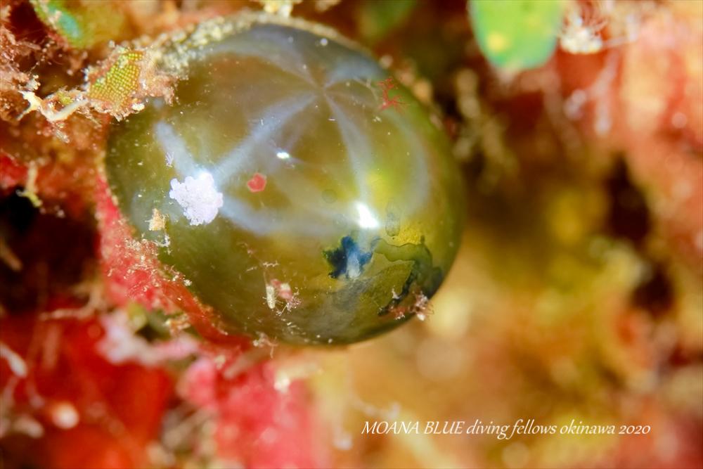 水中写真|沖縄ファンダイビング