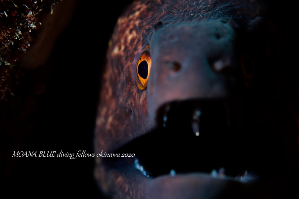 水中写真|沖縄ファンダイビングダイビング