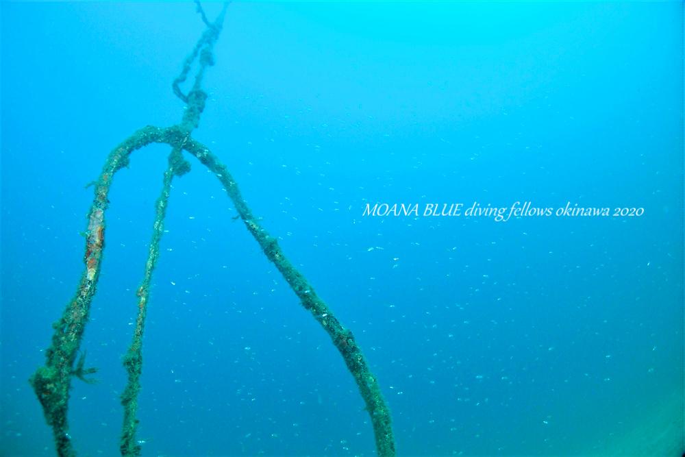 沖縄ファンダイビング|牧港ビーチ