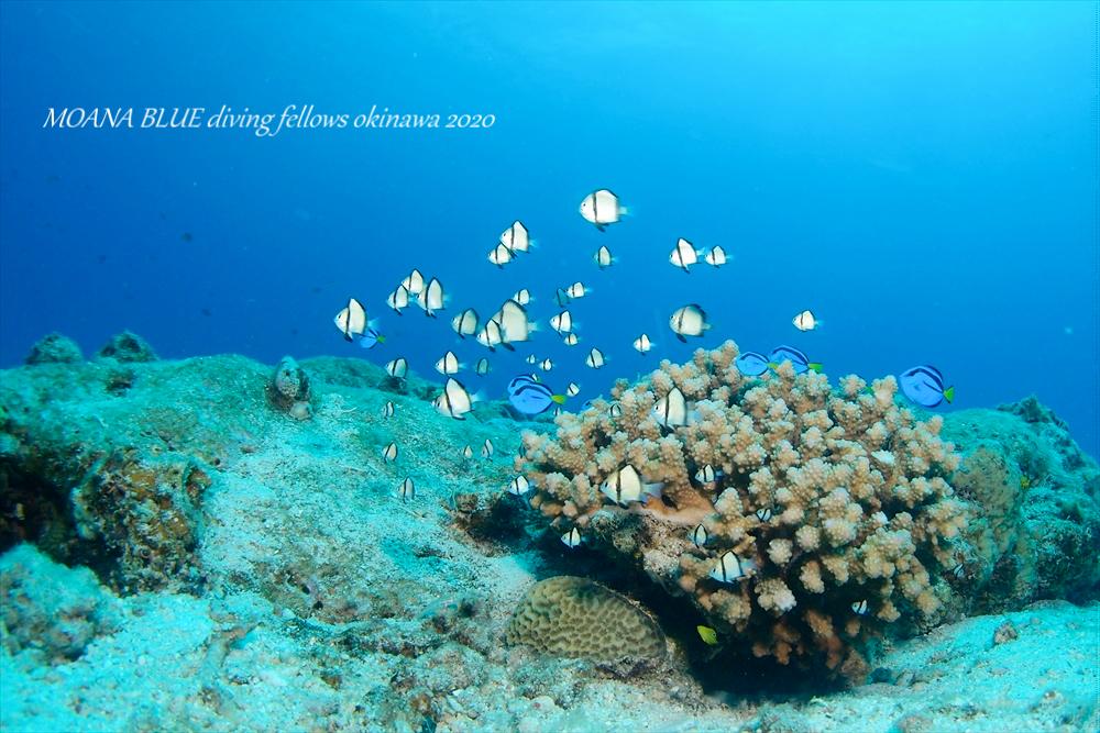 沖縄ファンダイビング|水納島&瀬底島