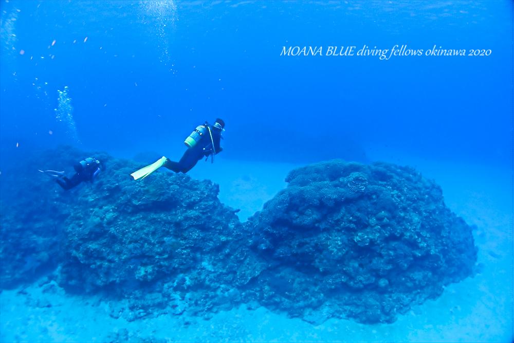ケラマファンダイビング|慶良間諸島