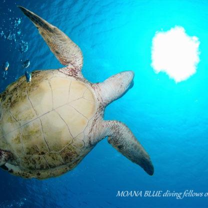 沖縄ファンダイビング|ケラマ
