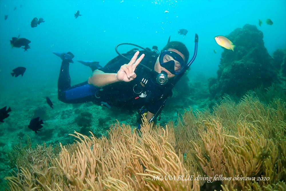 PADI限定水域 沖縄ダイビング
