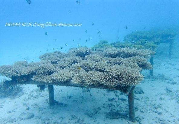 恩納村サンゴ村宣言|世界一サンゴにやさしい村づくり