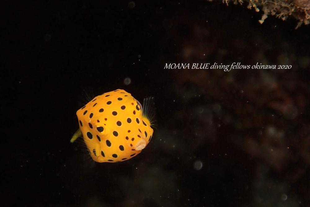 沖縄ファンダイビング|崎本部ビーチ