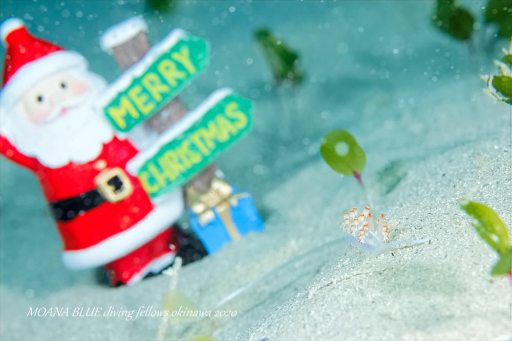 サキシマミノウミウシ|水中写真