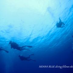 沖縄ボートファンダイビング