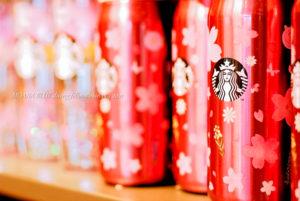スターバックス|桜