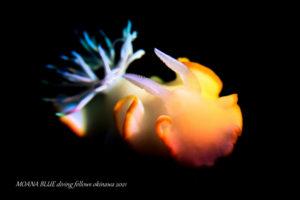 メレンゲウミウシ|虹撮