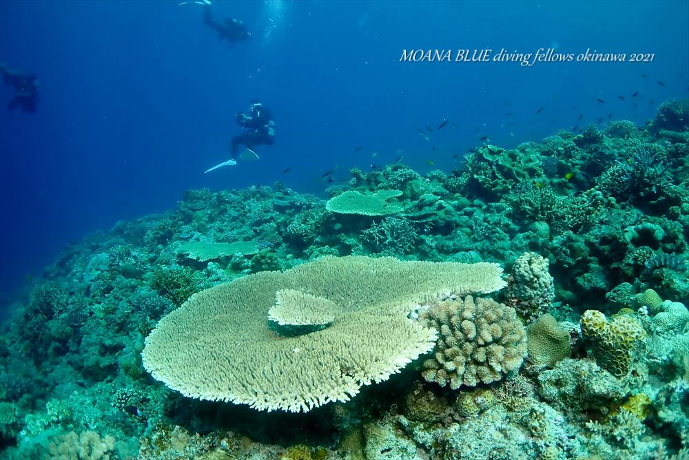ケラマ諸島|沖縄ボートファンダイビング