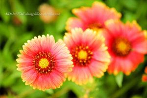 ガイラルディア|花撮
