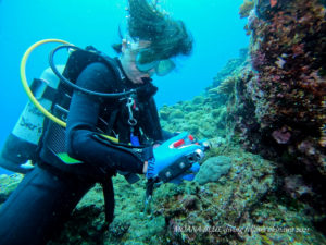 沖縄ウミウシダイビング|ファンダイビング