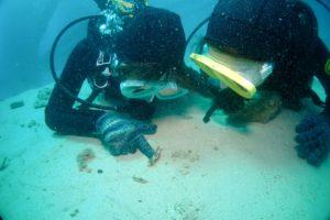 沖縄体験ダイビング ゴリラチョップ