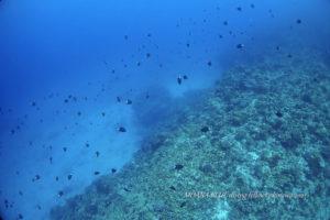 沖縄ボートファンダイビング|ケラマ諸島