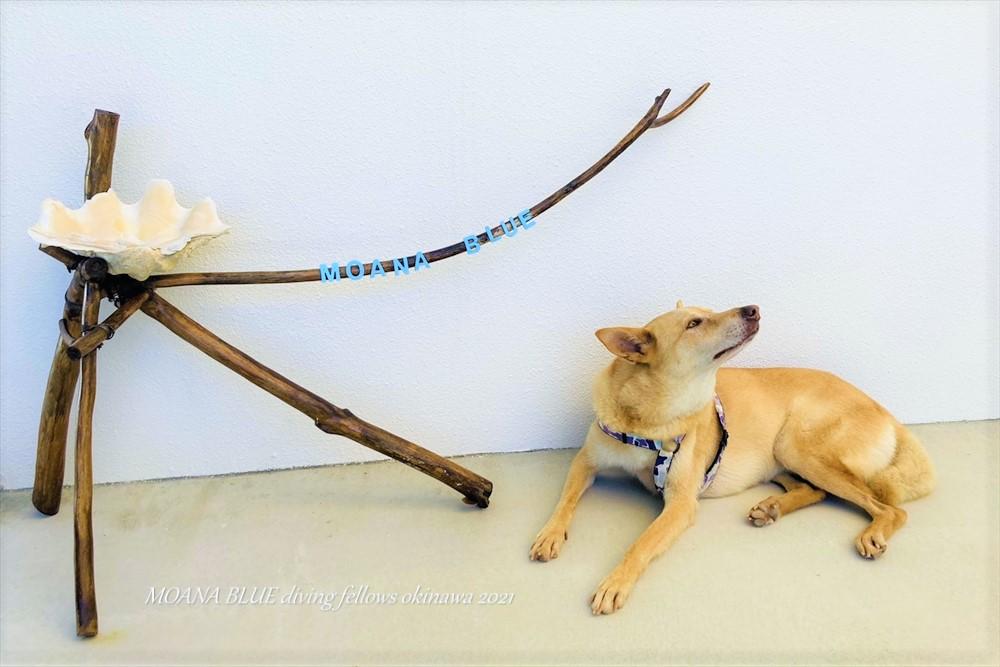 愛犬チャック|モアナブルー看板犬