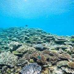 沖縄ボート体験ダイビング|沖縄ダイビングショップ