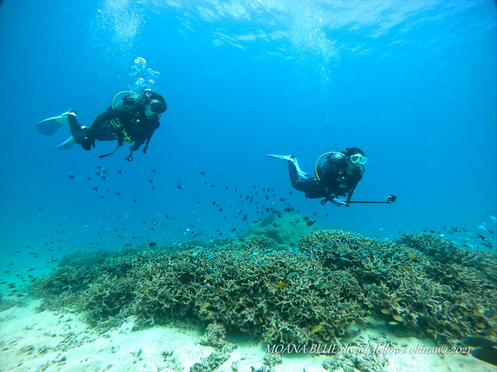 瀬底島ボートファンダイビング 沖縄水中写真専門店