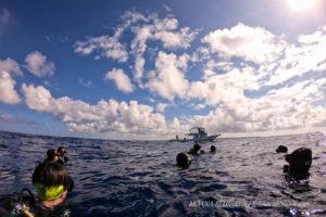 沖縄本島最強ポイント!トライアングル|沖縄ボートダイビング