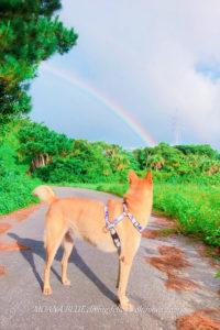 チャック|モアナブルー看板犬