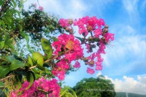 沖縄風景写真|花撮