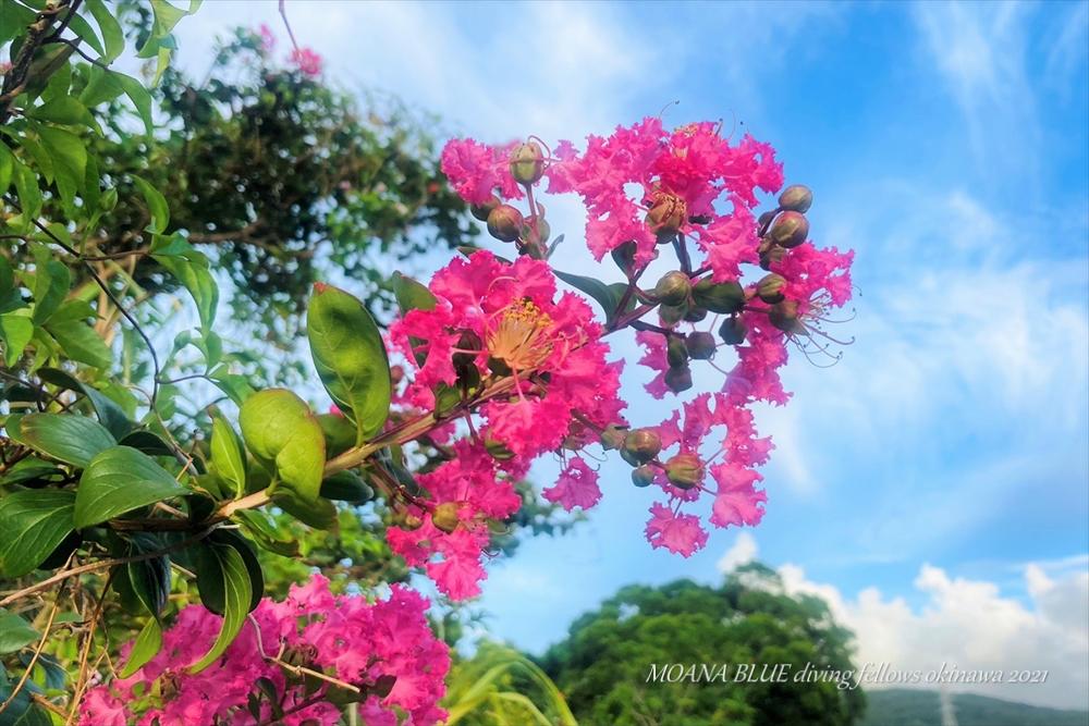 沖縄風景写真 花撮