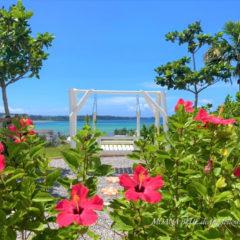ハイビスカス|沖縄風景写真