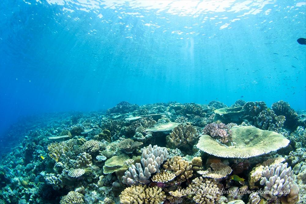 沖縄ボートファンダイビング 水納島サンゴ礁
