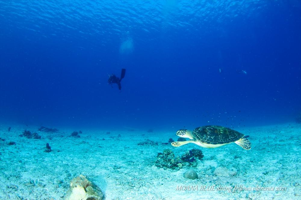 沖縄ボートファンダイビング チービシ