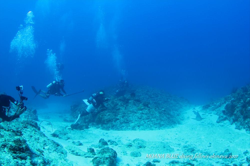 沖縄ボートファンダイビング トラフザメ