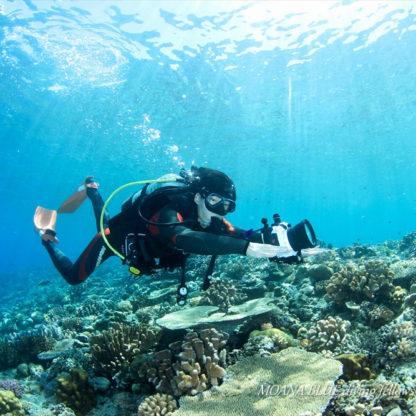 水納島&瀬底島ダイビング|水中動画クリエイター