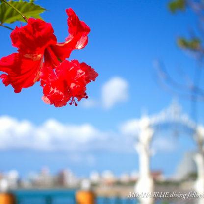 レッドフラミンゴ|沖縄風景写真